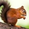 Vauveli on vihdoin auki!! - viimeisin viesti Orava